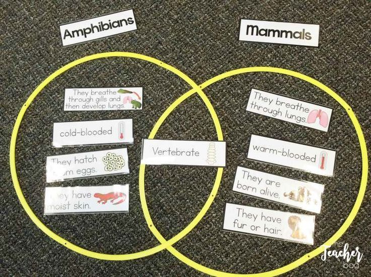 Use hula hoops for sorting or venn diagrams.