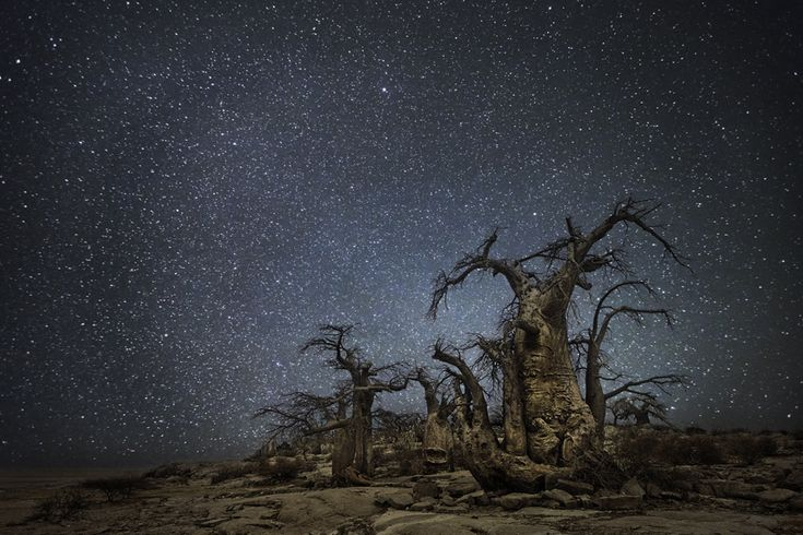 Beth Moon / Ara #photography #landscape #tree #stars