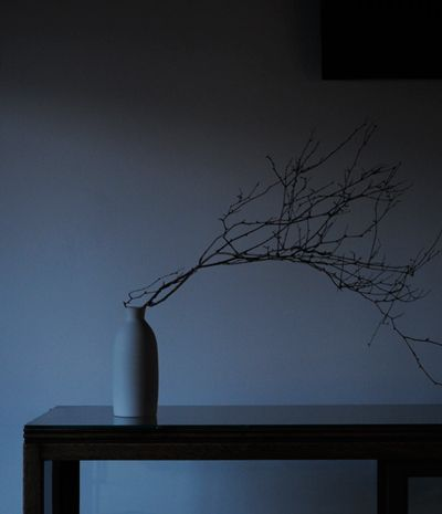 Ikebana: love the shadow look!  I want to make this with an old milk bottle