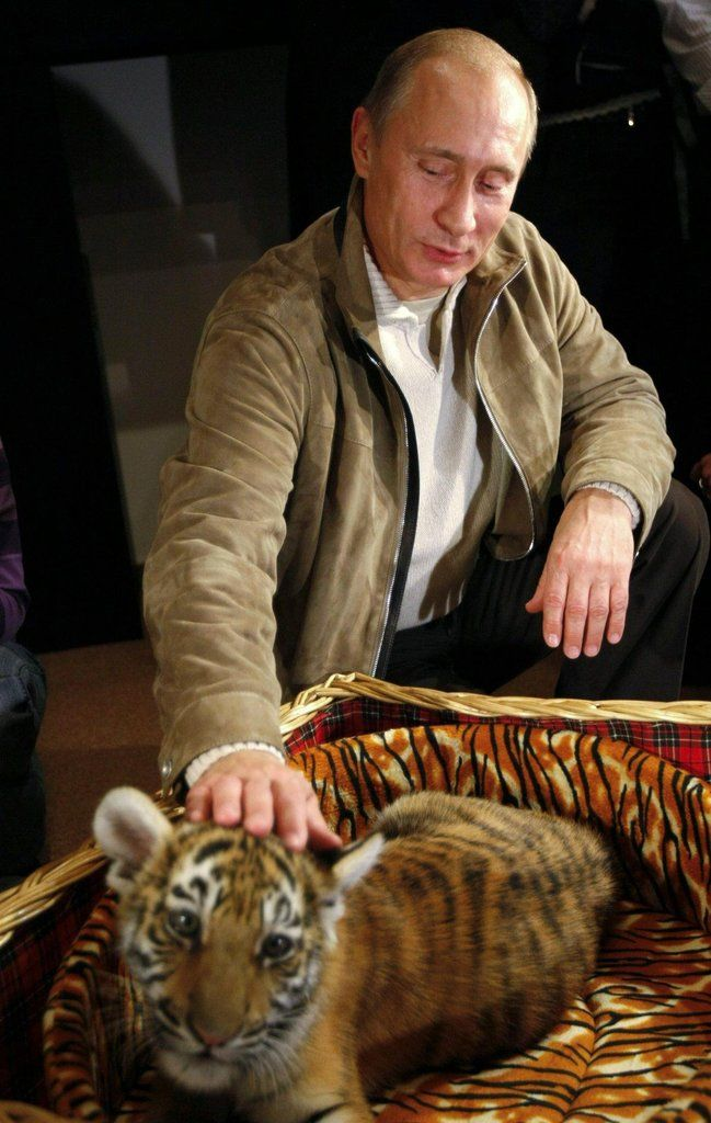 Even Vladimir Putin himself can't resist a kitten.