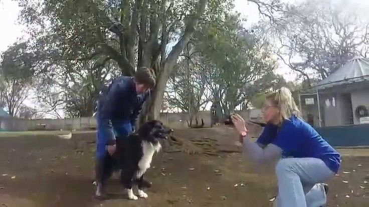 Everybody loves our Adoption Album we post once a week and we thank all our supporters for sharing the album far and wide to help find homes for all our animals. We want to share with you a sneak peek of behind the scenes footage of the fun and games these animals have in the spotlight www.kloofspca.co.za