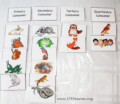 Types of Consumers: Free Food Chain Activity Cards from STEMmom.org. printing now knowing these will be a hit