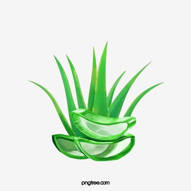 Aloe Vera Gel Green Food Png Transparent Clipart Image And Psd File For Free Download Aloe Vera Aloe Vera Gel Aloe