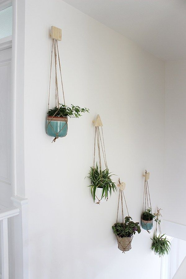 Wall Of Hanging Plants With DIY Plywood Hooks And Macrame Hangers