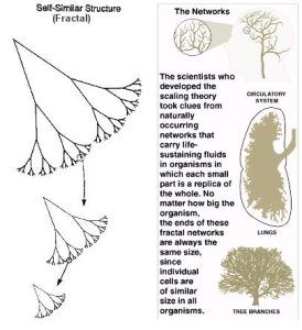 fractal trees and networks