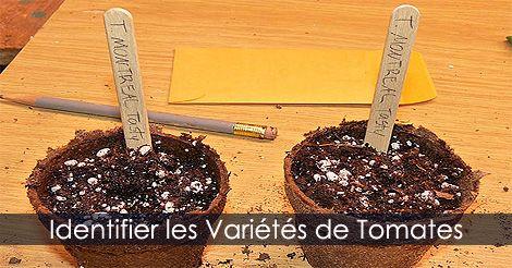 Identifier semis de tomates. Instructions : http://www.jardinage-quebec.com/guide/semis-de-tomates/graines-tomates-4.html