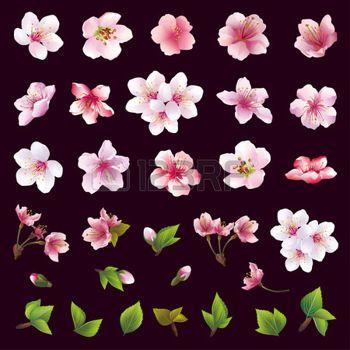 dibujos flores: Gran conjunto de diferentes flores de cerezo hermosas y hojas aisladas sobre fondo negro. Colección de blanco rosa flor de sakura púrpura cerezo japonés. Elementos del diseño floral de primavera. Ilustración vectorial Vectores