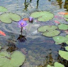 DIY Outdoor Fish Pond