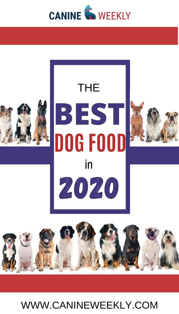 Canidae Dog Food Review 2020 Company Recalls Ratings Smartest