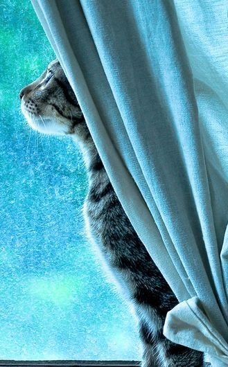 followthewestwind:  (via Turquoise kitty love | Heavenly Inspiration | Pinterest)