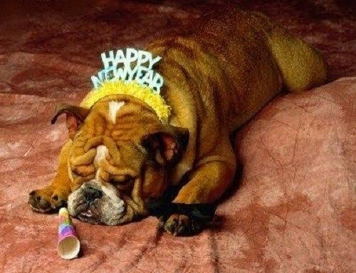 This little guy partied too hard :( #NewYear #Dog #DogMeme #PetHumor