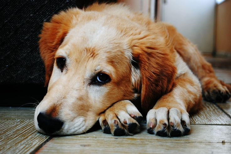 Low protein dog food is the best thing which could be given to your lovely pet dog. most vets will suggest taking a low protein diet during illness.