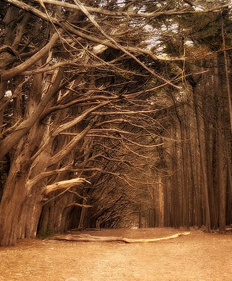 Bay Area Backroads Places I Want To Visit Pinterest Placearine Reserves