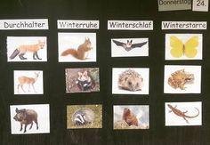 """Kleine Unterrichtseinheit zum Thema """"Tiere im Winter"""". Nachdem wir geklärt haben, was Winterstarre etc bedeutet, bin ich mit einer selbstgeschriebenen Geschichte eingestiegen, bei der all die Tiere drin vorkommen und erzählen, ob sie Winterschlaf,... machen. Dann sollten sie zuordnen. Dann gab es noch ein AB zum selber zuordnen der Tiere. Hat allen Spaß gemacht #grundschulideen #lehrer #lehrerfreuden #lehrerin #grundschule #grundschullehrer #grundschullehrerin #school #primaryschool #inst..."""