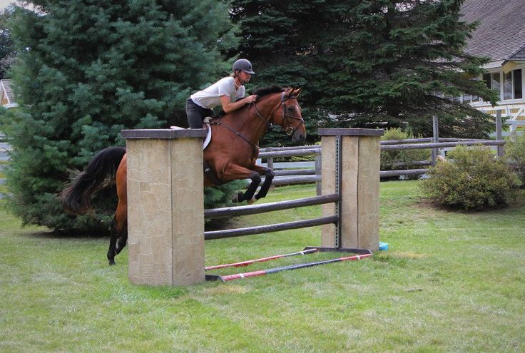 2005 16.3h Trakehner gelding. Competed in 1.10m on the Trillium circuit, 1.15m on the A circuit, and in jumper medal classes, as well as Training Level eventing.  Located in Ontario, Canada.