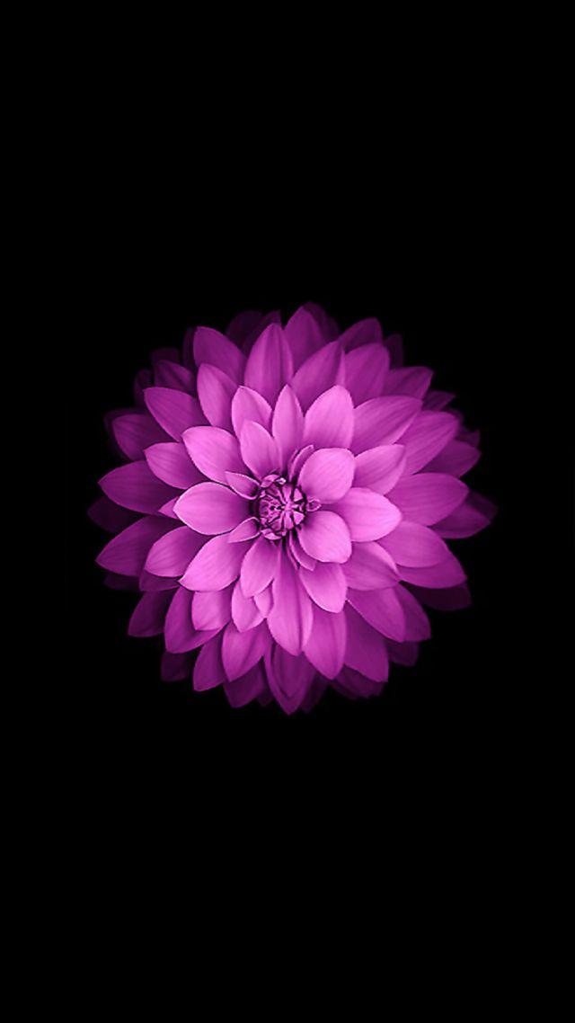 Iphone Wallpaper 4k Flowers