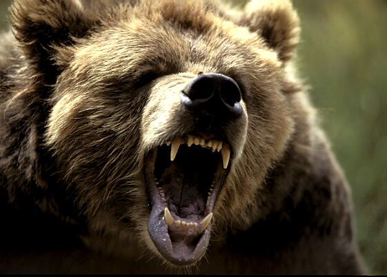 I got Grizzly Bear - What fierce animal are you most like {QUIZ}?You're scary, dangerous, and a bit dark, but extremely beautiful. Unbeknownst to most, you have soft spots and emotions too. You deeply love and care, but if someone messes with you, they'll learn a lesson they'll never forget. If someone is on your good side, oh, how lucky they are!