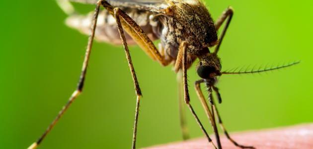 اكتب في دفتري عن هذه الحشره في حدود فقرتين Insects