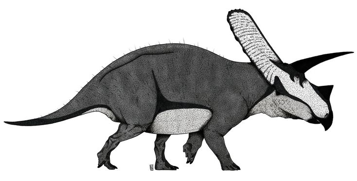 Ceratopsids are really cool guys. With all those freakin' horns, stouty and rhino-like bodies, parrot-like beaks and long and perforated skulls they look very strange. The closest thing to some ant...