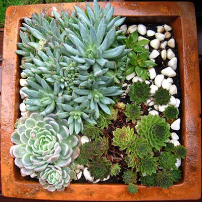 Una peque a composici n con plantas suculentas euphorvia - Cactus en macetas pequenas ...