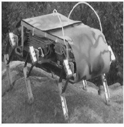Figure 8 Image of RHex.