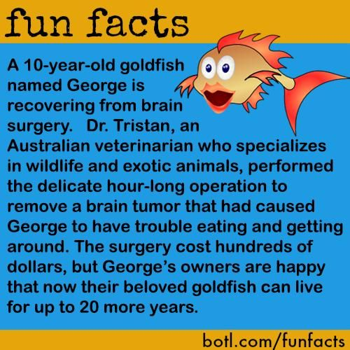 Best 25 goldfish names ideas on pinterest animal for Fun fish facts