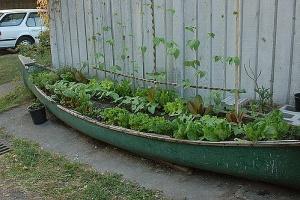 Tend to your garden canoe!: Garden Ideas, Canoe Garden, Gardening, Gardens, Raised Garden