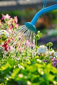O CULTIVO A VIDA: 10 Dicas para jardineiros iniciantes