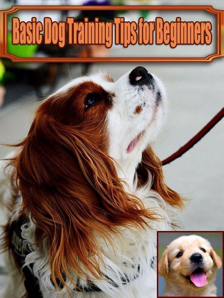 Dog Behavior Signals And Dog Training Courses In Delhi Basic