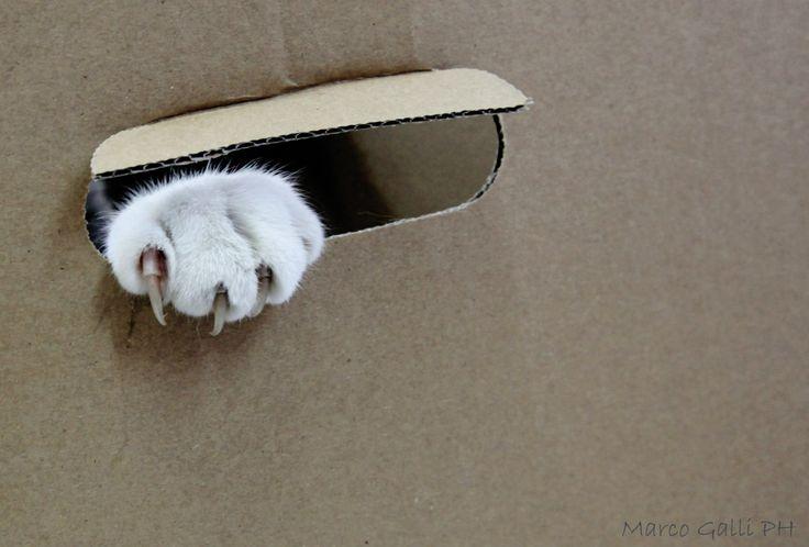 © copyright Marco Galli. Zampetta... Con Gatto Mirò. Galli Marco il fotografo dei gatti. CLICCA QUI https://www.facebook.com/ilgatto72?ref_type=bookmark