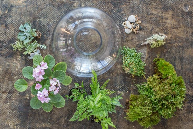 Making a terrarium is even easier with this helpful guide to choosing terrarium plants.
