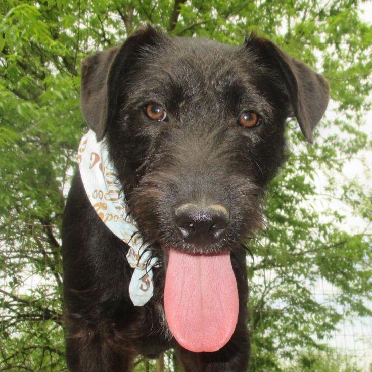Ziemlich Drahthaariger Terrier Yorkie Mischung Fotos - Der ...