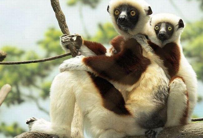 Bronx Zoo – Зоопарк Бронкса в Нью-Йорке