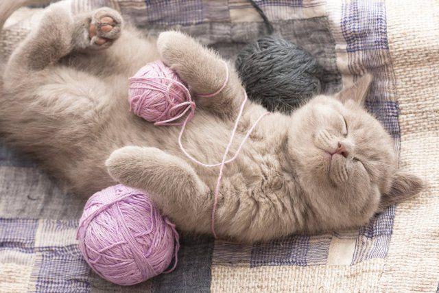 20 fatos estranhos que você provavelmente não sabia sobre gatos 2 20 fatos estranhos sobre gatos você provavelmente não sabia
