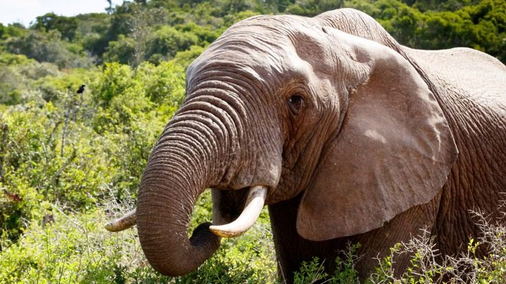 Elephant #Photos by Mark de Scande in The Addo Elephant National Park #W...