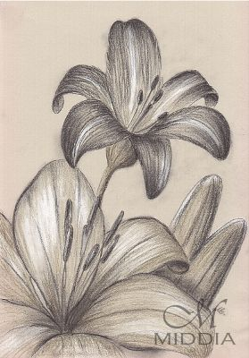 Middia Lenormand. Project started III 2015 - Lilies - Lilie