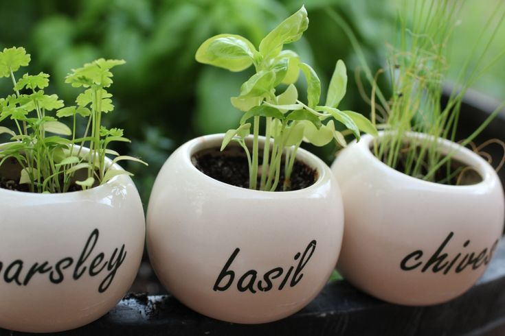 Start a small herb garden. Related: make herb butter. // Well, I made the herb butter in week 2.