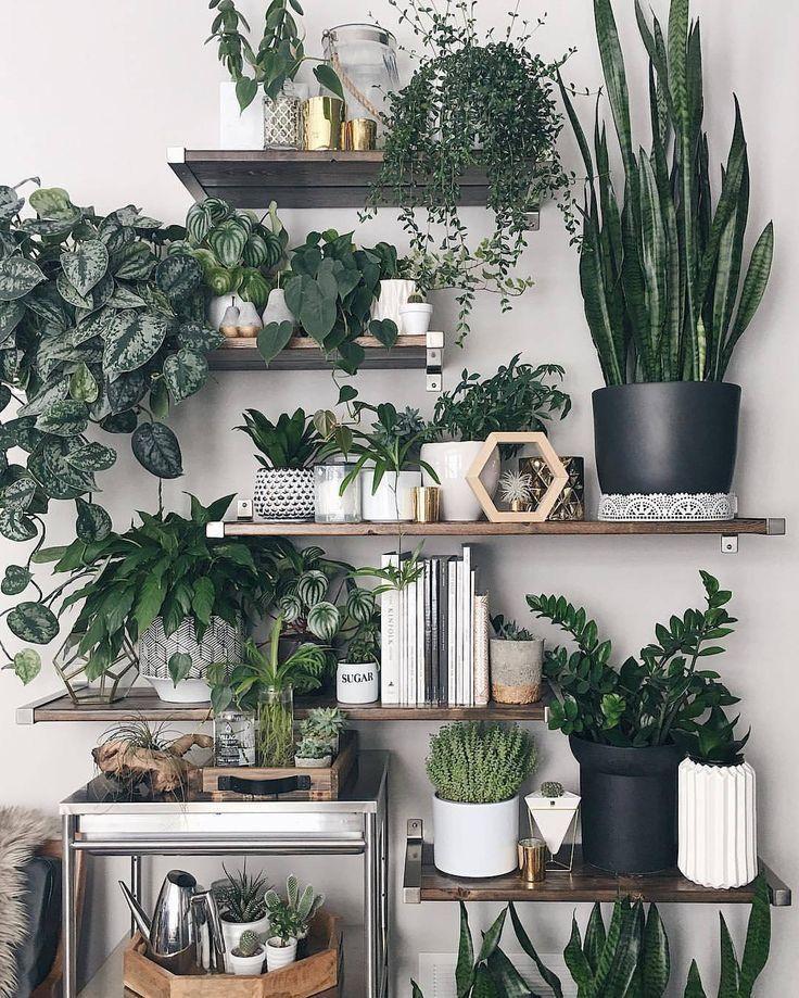 Pflanzenregal #urbanjungle #grün #zimmerpflanzen #wohnung ...
