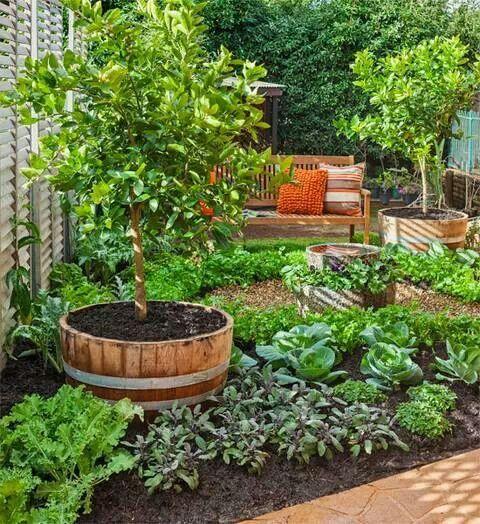 My dream veggie garden.                                                                                                                                                      More