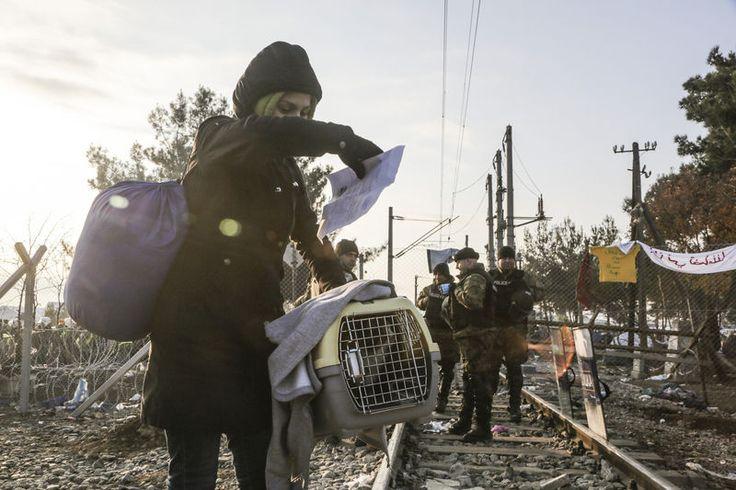 Een volwaardig lid van de familie, zo omschrijven veel mensen hun hond of kat. Dat blijkt ook zo te zijn als de bommen vallen in de straat en terroristen oprukken langs de huizen. Deze vluchtelingen namen hun huisdier mee, zo zien we op foto's die Het Laatste Nieuws de afgelopen weken en maanden verzamelde. Ze zijn mee op de vlucht, in afwachting van betere tijden. © AP