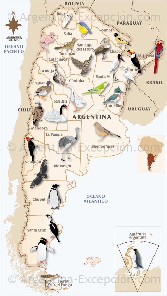 Mapas de Argentina ▷ Mapa de Aves en Argentina: descarga nuestras mapas y descubra nuestras informaciones prácticas sobre Argentina.