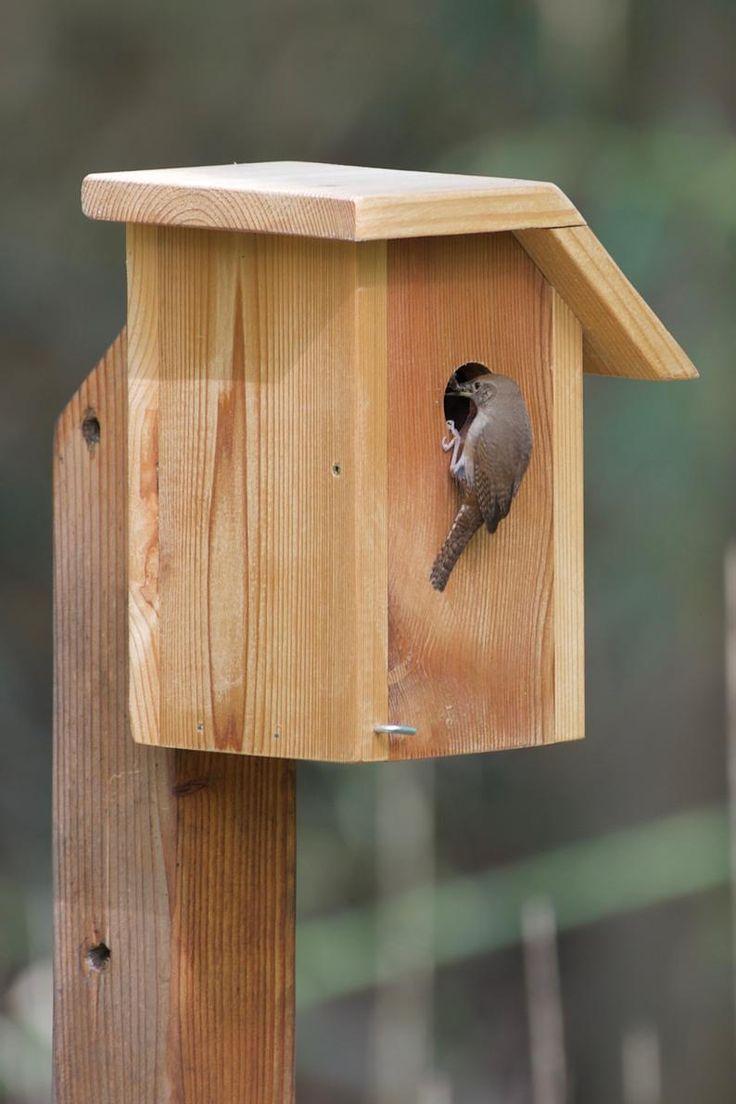 House wren cedar bird house