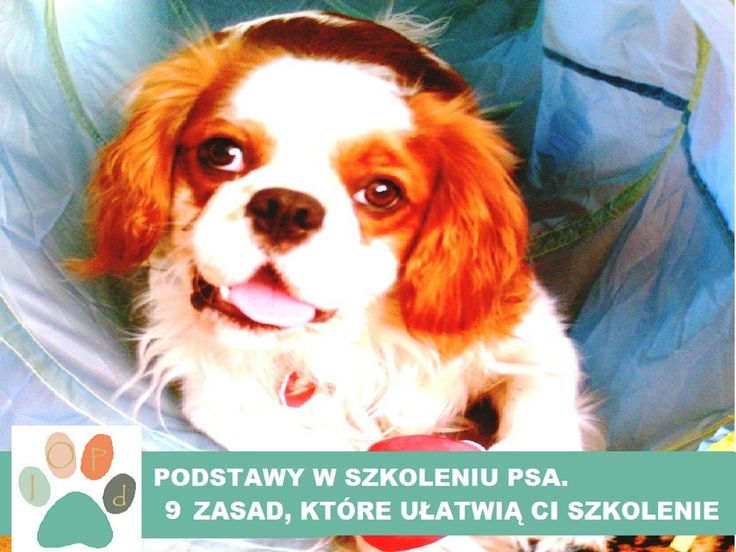 Instrukcja obsługi Psa domowego: PODSTAWY W SZKOLENIU PSA. 9 ZASAD, KTÓRE UŁATWIĄ CI SZKOLENIE PSA.