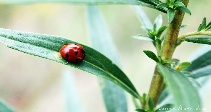 A Ladybug, They find me every year when I need to make a wish.
