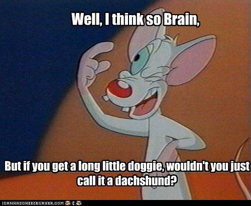 17 Best images about Pinky and The Brain on Pinterest ...