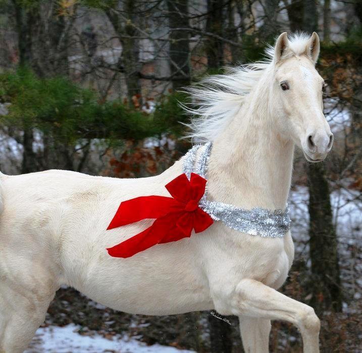 97 best Christmas Horses images on Pinterest | Christmas animals ...