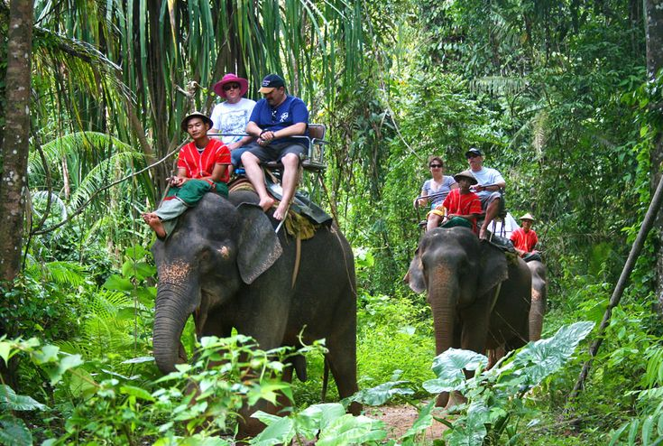 Elephant trekking is a popular activity in Phuket. Even though elephants are not a native species of the island – Phuket elephants come from the cooler north of Thailand – you can find between 15 and 20 camps offering elephant trekking here. Many comments have been made over the