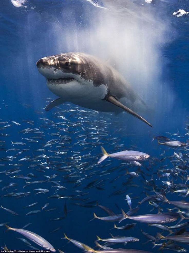 Las fotografías más increíbles bajo el mar