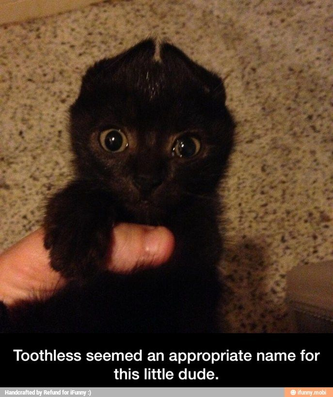 Toothless seemed an appropriate name for this little dude. #Humor