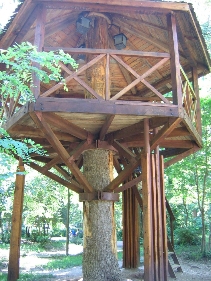 Wraparound treehouse tree houses pinterest trees for Adult treehouse plans